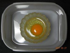 生卵保存実験(容器有)①