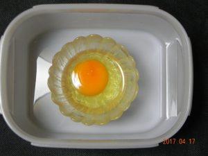 生卵保存実験(容器有)④
