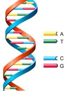 DNA二重螺旋構造