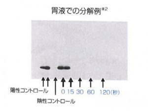胃液での分解例(※注3)