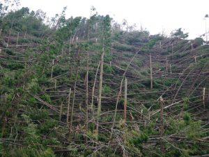 台風21号の影響で樹木が倒壊した高槻森林公園①