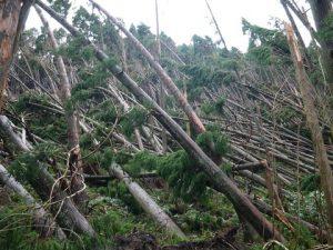 台風21号の影響で樹木が倒壊した高高槻森林公園た③