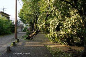 台風21号の影響で倒壊した茨木市の公園の樹木