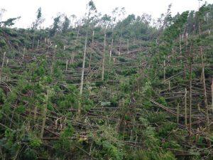 台風21号の影響で樹木が倒壊した高高槻森林公園②