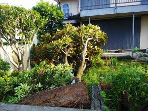 台風21号で木が根こそぎ倒壊した庭