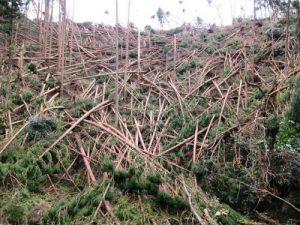 台風21号の影響で樹木が倒壊した高槻森林公園④