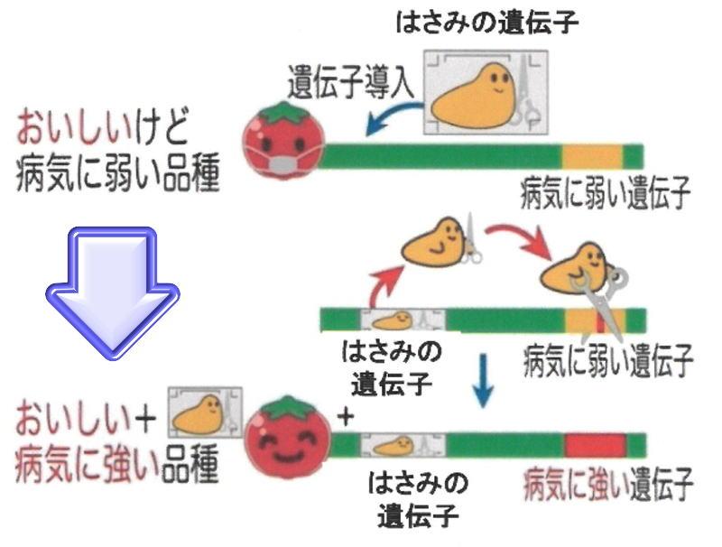 ゲノム編集技術 2