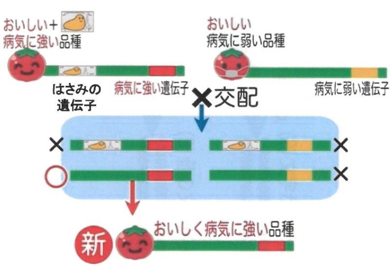 ゲノム編集技術 3