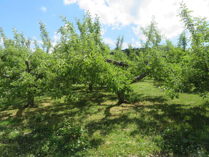 弘前・リンゴ農園①