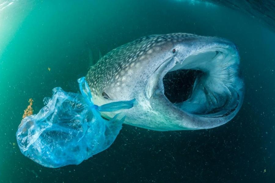 ギャラリー:プラスチックごみに翻弄される動物たち①