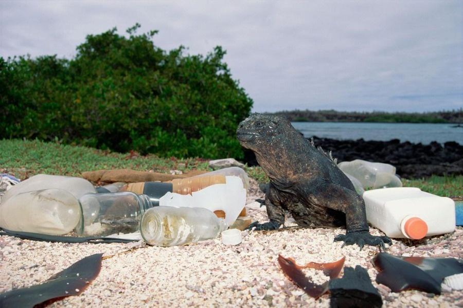 ギャラリー:プラスチックごみに翻弄される動物たち④