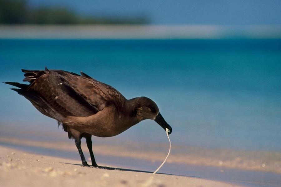 ギャラリー:プラスチックごみに翻弄される動物たち⑥