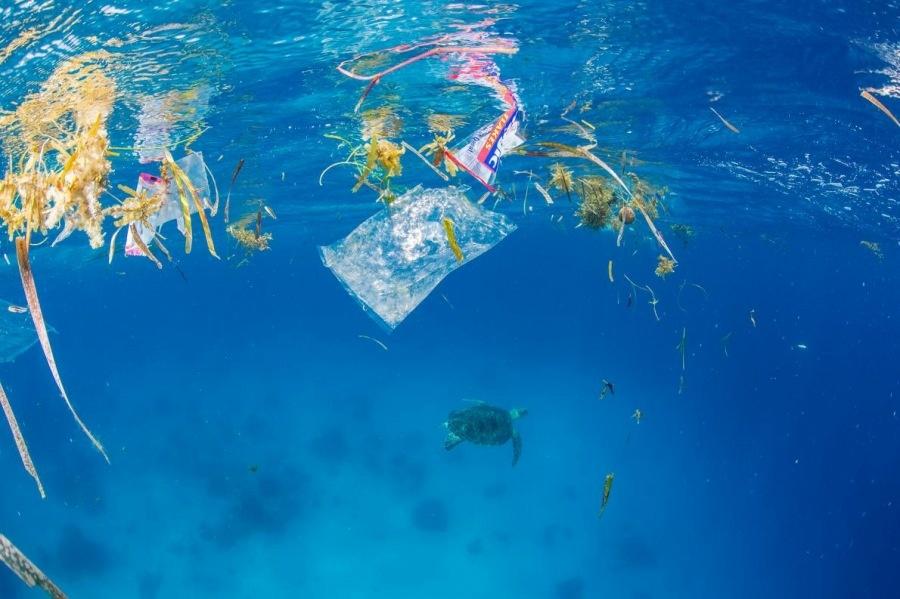 ギャラリー:プラスチックごみに翻弄される動物たち⑦