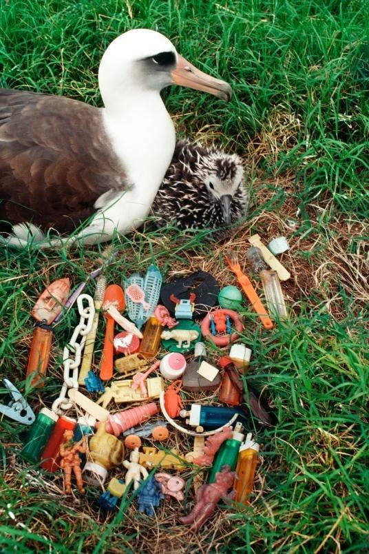 ギャラリー:プラスチックごみに翻弄される動物たち⑧