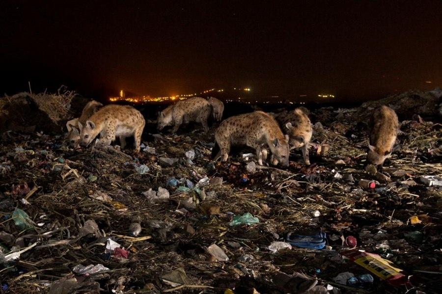 ギャラリー:プラスチックごみに翻弄される動物たち⑩