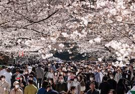 花見に大勢の人が押し寄せた上野公園