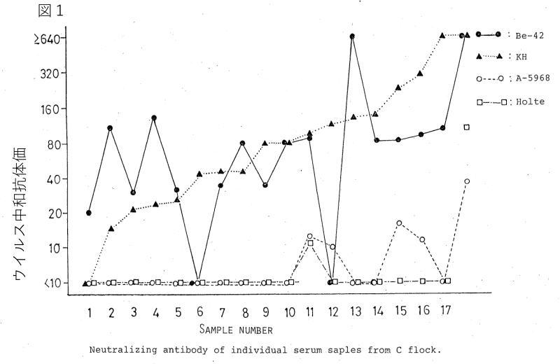 IBウイルスに対する抗体陽性反応結果