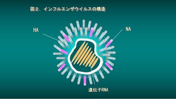 インフルエンザウィルス